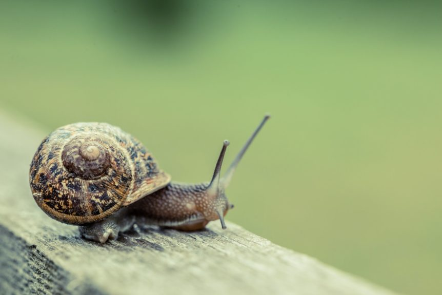 Close up of a snail in the countryside