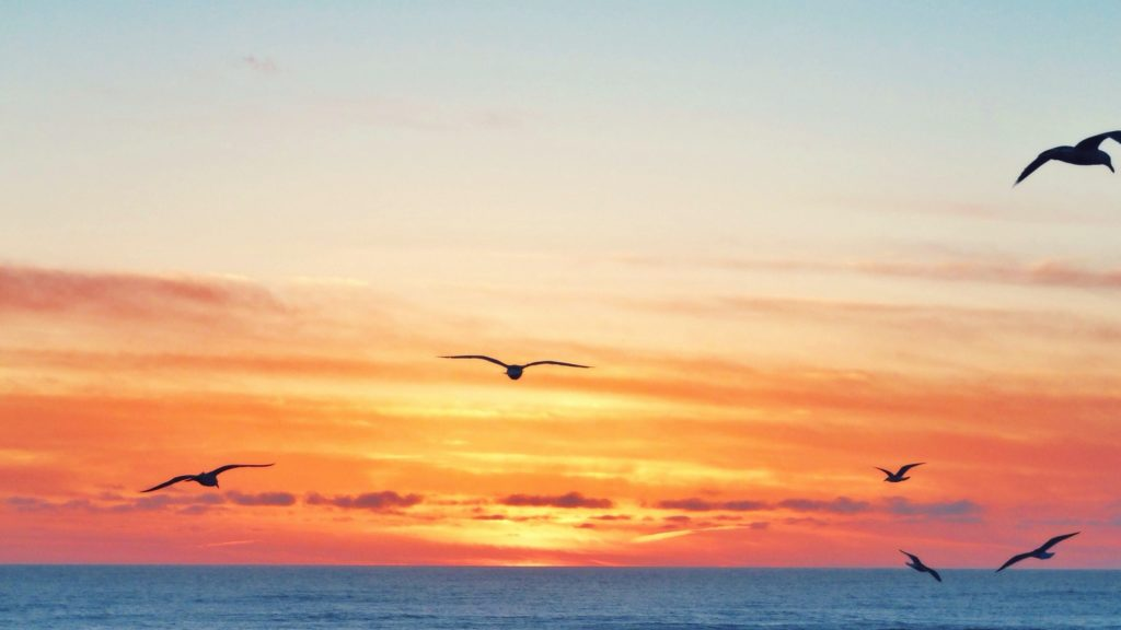 How the SECURE Act May Impact Retirement Distribution Elections: seagulls in the sunset