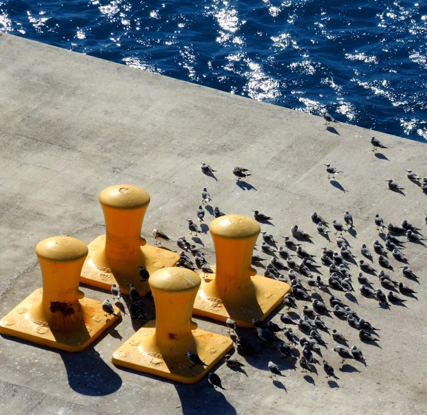 How the SECURE Act May Impact Retirement Distribution Elections: Yellow bollards on a dock to secure ships mooring lines and seagulls facing against the wind